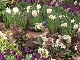 NewCa.com: Juno Rocks Gardens - Jann Arden at 2012 Canada Blooms