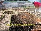 Jardin médiéval et développement durable