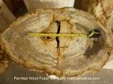 Petrified Wood Slabs, Petrified Wood Slices and Petrified Wood Tile