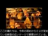 ケージ飼育の卵を禁止、でも食卓に…。ZDF(ドイツ公共放送)
