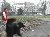 Exercices 2011-2012, par école Gabriel Péri (CM1-CM2), St M. d'Hères (Grenoble)
