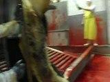 Hayvanın Kesim kabininden çıkarılışı ve Kesim Kabinine girişi...