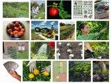 Love to Garden But Short on Money - 10 Money Saving Ideas
