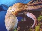 Méditerranea 2012 - Festival international de l'image sous-marine & de l'aventure - à Antibes