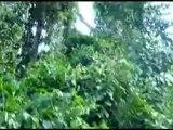 Pygmy harp - la harpe pygmee