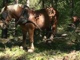 Débardage à cheval dans le Parc national des Ecrins