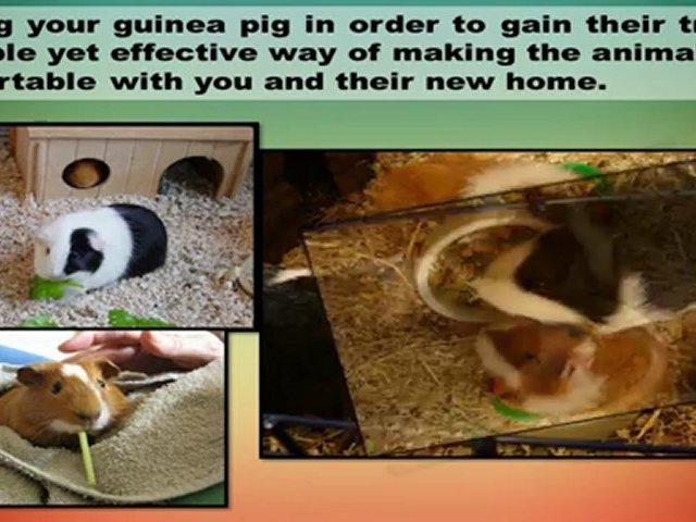 Guinea Pigs Home