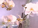 La caméra en balade - Orchidarium de Prangins (18-04-2012)