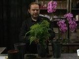 Déco Brico Jardinage : Rempoter une plante