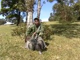 Chasing Spring - Turkey Chasing in Hawaii