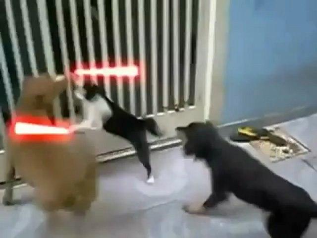 gat Jedi