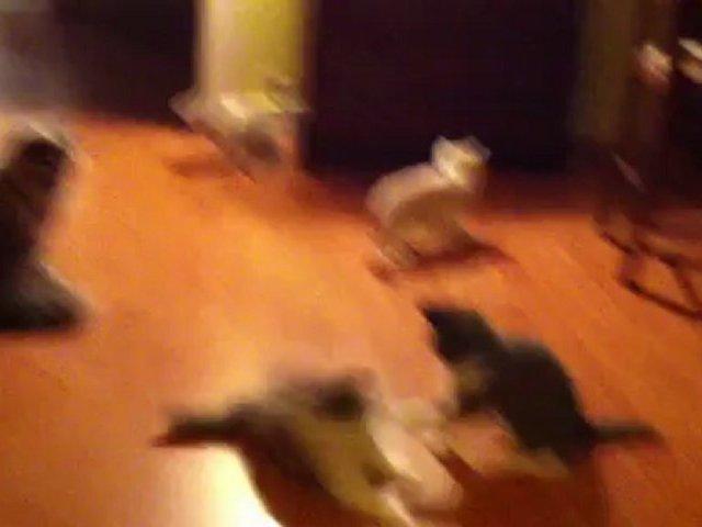 Le nouveau jeu des chatons… trop gâtés quand même !