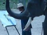 THAILANDE - Chiang Mai - un éléphant qui dessine !!