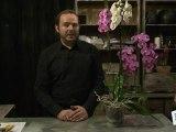 Déco Brico Jardinage : Quel entretien, soin, arrosage pour orchidée ?