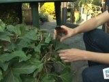 Déco Brico Jardinage : Comment bouturer une plante d'extérieur ?