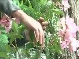 Déco Brico Jardinage : Conserver des fleurs coupées