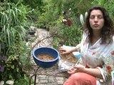 Déco Brico Jardinage : La sphaigne en jardinage