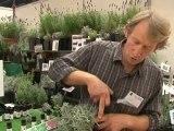 Déco Brico Jardinage : Planter de la lavande dans son jardin