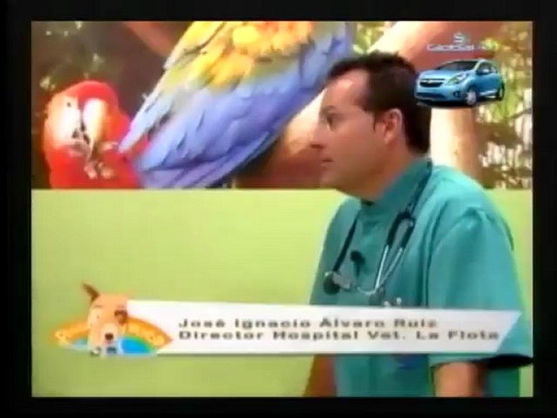 SALUD Y VIDA DE LOS ANIMALES...DR CHICA , COLOMBIA +57 3115021449...DR CROGITE , BRASIL +57 32066420