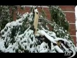 Maggio a Sarajevo con la neve: la città imbiancata e al gelo. Eccezionale nevicata primaverile: non accadeva da 50 anni