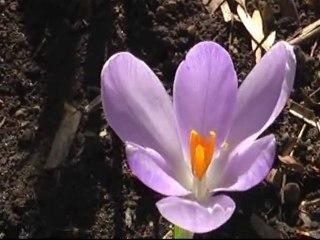 Весна в Москве
