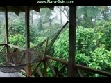 Costa Rica Ecotourism Rainforest Rara Avis