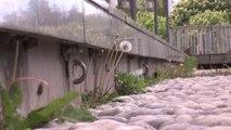 Nature Urbaine Sauvage: la biodiversité en ville !