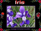Le langage des fleurs 1