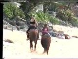 Chien vs cheval chien ko