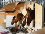 Chevaux et poney du centre équestre