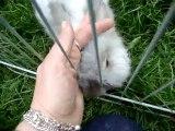 24_07 799 Ma lapine Angora Anglaise Ashley pour faire plaisir aux amateurs de lapins...