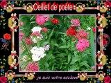 Le langage des fleurs 2.......