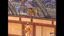 Les Fauves, lions et lionnes (Le Signe du Triomphe) du Puy du Fou