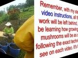 magic mushroom spores - magic mushroom cultivation - spores mushroom