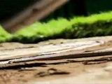 Cvetelina Qneva - Dve Cherti (Official Video) [www.gocmenkolik.com]