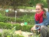 7 au jardin : les plantes utiles au jardin