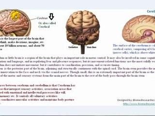 Understanding EEG Part3, What is electroencephalography (EEG)?