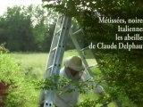 Métissées, noires, Italiennes : les abeilles de Claude Delphaut