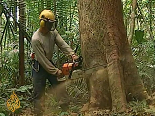 EU set to tighten rules on timber trading
