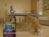 jouer au ping pong avec son chien