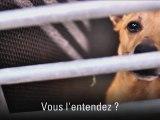 Abandon animale et vacances ( 30 Millions d'amis )