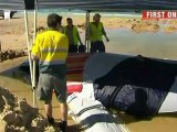 Rescuers race to save beached baby whale