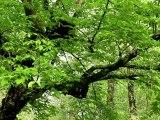 Paris Bois de Boulogne - Arletty - En douce 1