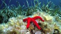 Cartham : programme de cartographie des habitats marins patrimoniaux en France métropolitaine