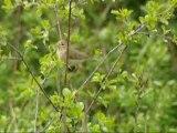 Inventaire par la Ligue de Protection des oiseaux de Côte d'Or