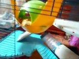 La cage de mes rats aménagée