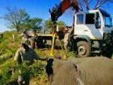 Equipe é especialista em devolver elefantes ao seu habitat
