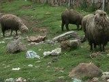 Le Titicaca, un lac pollué