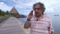 Mammifères marins en Polynésie : mission Remmoa recensement de la mégafaune marine par observation aérienne