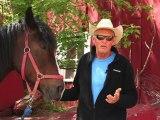 Horseback Riding Ottawa - How do you control a horse while horseback riding?